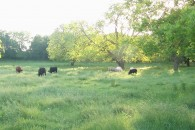 13.84 Acres MOL Home site and Pasture Land at 827 CR 417 Satin, TX   for 165786