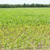 83 Acres MOL Farmland