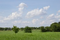 37.241 Acres 994 CR 459 Troy, TX 76579 at  for